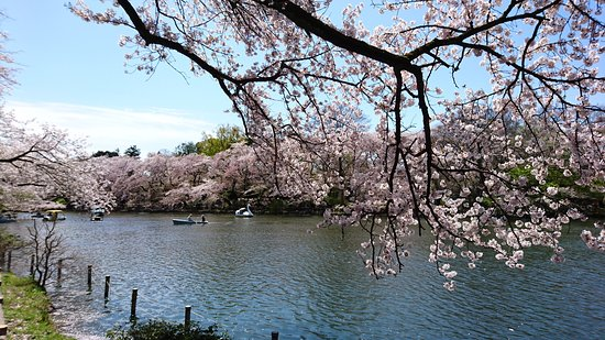 Musashino, Japón: Boating is also available to do