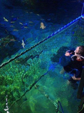 Sea Life Blackpool : Shark snorkeling!