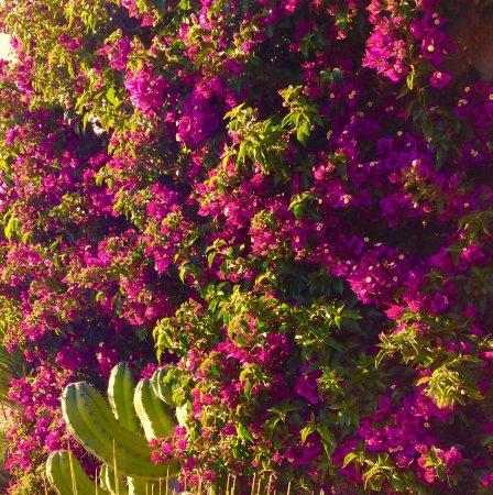 Pau, Spanyol: photo7.jpg