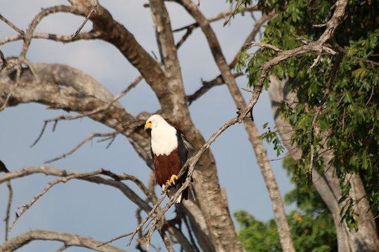 Kasane, Botswana: photo3.jpg