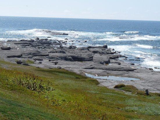 Port au Choix, Canada: rocks