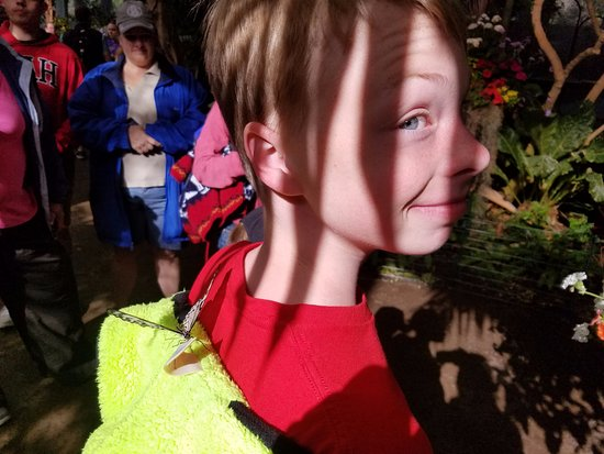 Escondido, CA: butterfly garden (a special exhibit)