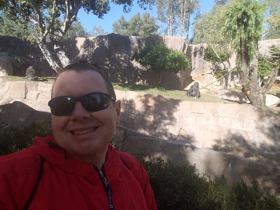 Escondido, CA: viewing the gorillas