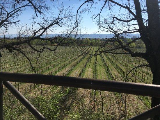 Azienda Agraria Saio: viñedos. lugar para picnic!