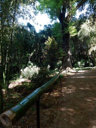 Generargues, Γαλλία: Taille d'un bambou