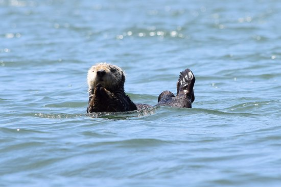 Moss Landing, CA: Kayaking with sea otters