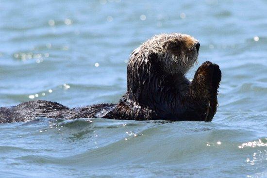 Moss Landing, Kalifornien: Kayaking with sea otters