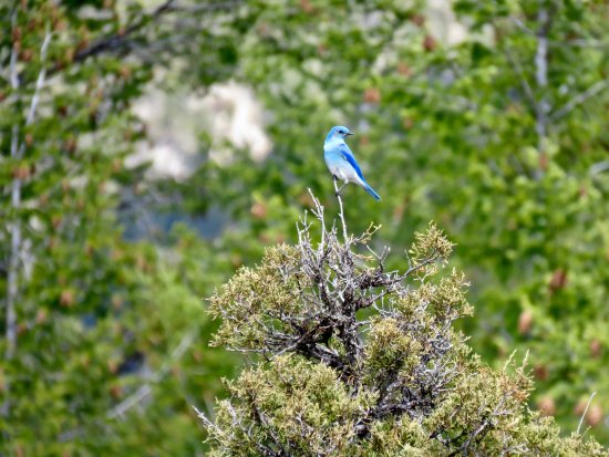 Radium Hot Springs, Canada: Wildlife on view from The Old Coach Trail
