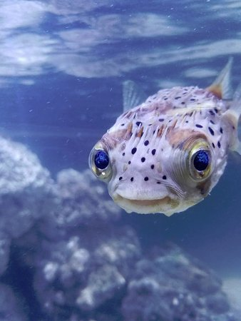 Happy smiling fish picture of branson 39 s wild world for Fish s wild