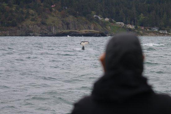 Island Adventures: Whale slap