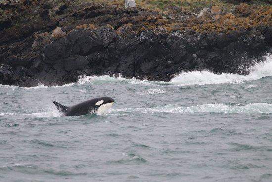 Island Adventures: Orca