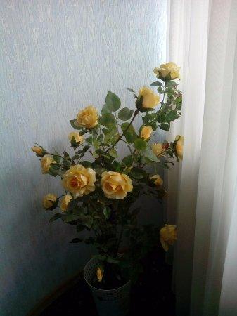 写真ロモノソフ枚