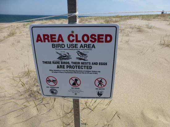 Race Point Beach: Parts of the dunes are roped off to protect nesting birds.