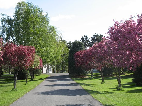 Canton, Estado de Nueva York: Flowering Crabapple trees line the entrance
