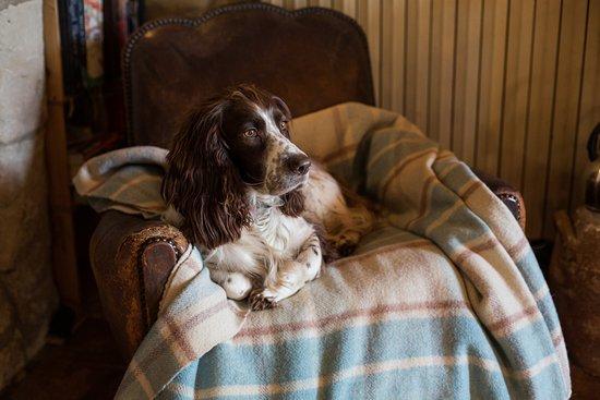 La Grande Maison d'Arthenay: Ella is waiting to welcome you