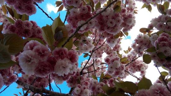 Biron, Francia: Les arbres en fleurs au camping le moulinal.