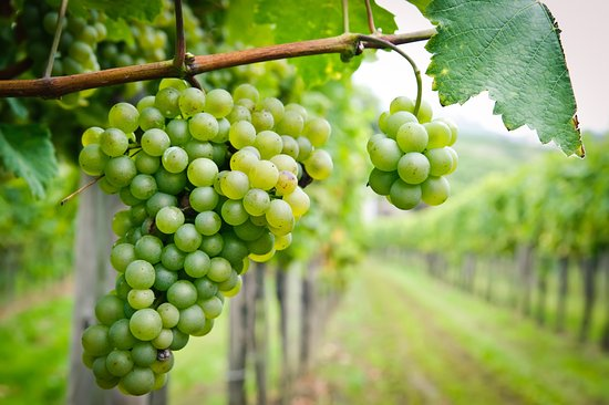 Niagara Grape & Wine Tours