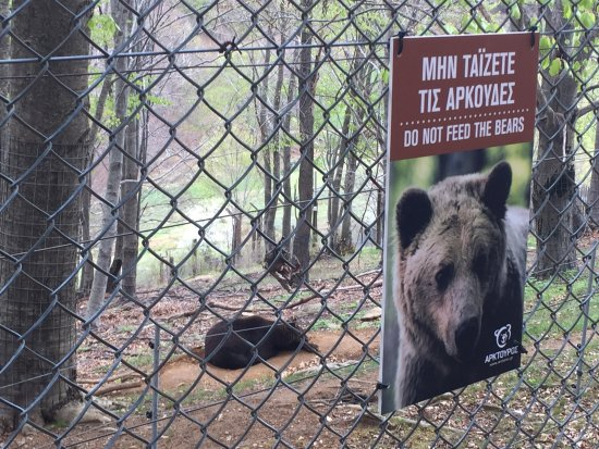photo4.jpg - Picture of Arcturos Brown Bear Sanctuary ...