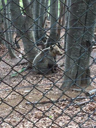 Βόλτα στο καταφύγιο. - Picture of Arcturos Brown Bear ...