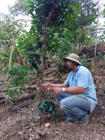 Atenas, Costa Rica: the various plants that make up the bio-diversity of the plantation