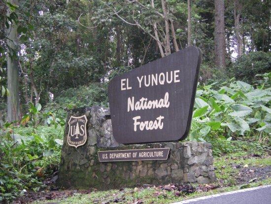The El Yunque Rain Forest: Entrance