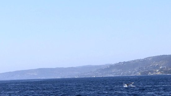 Dana Point, CA: That's zoomed in 30x Optical & some more digitally. WASTE.