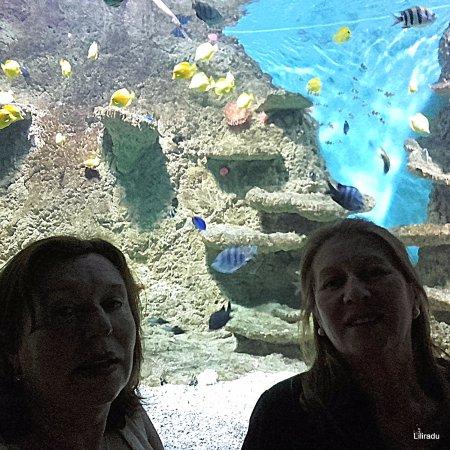 Disfrutando como ni as estanque de peces tropicales for Estanque de peces