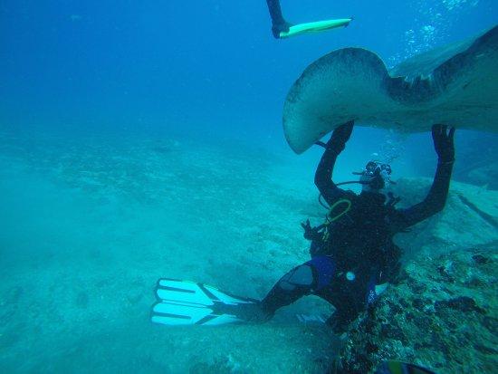 LJ Diving Tenerife : Superbe plongée avec raies et tortue