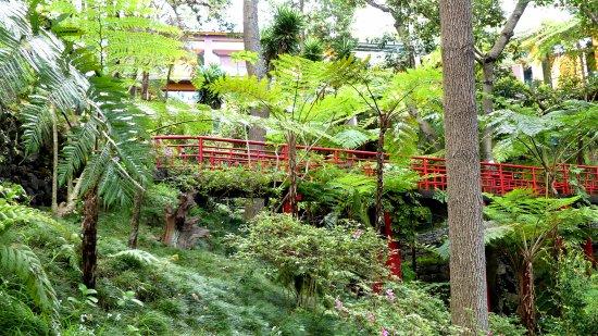 Monte Palace Tropical Garden : Jardin tropical Japonais
