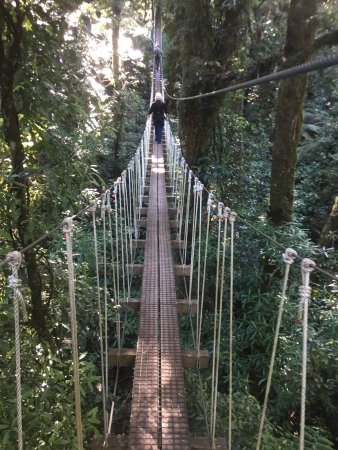Rotorua Canopy Tours: bridge, so cool!