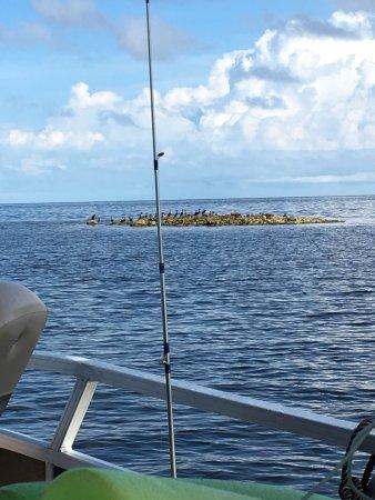 นิวพอร์ตริชชีย์, ฟลอริด้า: Our sons and my husband ready to head out of the channel and into open water. We had dolphins fo