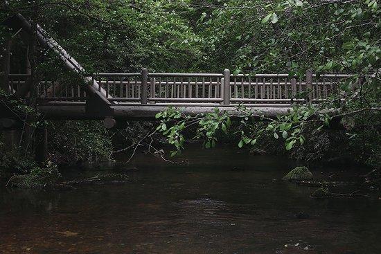 Smithgall Woods Conservation Area: Bridge