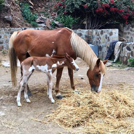 La Mision, เม็กซิโก: New baby Apache and mom Mili