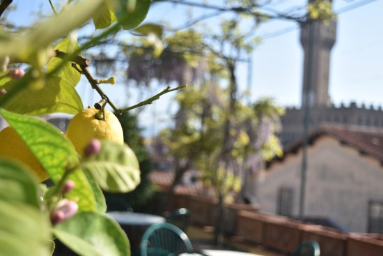 Hotel Hermitage: Lemon tree on the rooftop terrace looking towards the towers of Florence