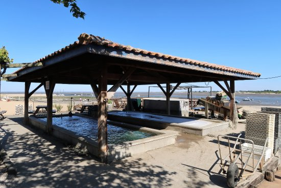 La vasca delle ostriche photo de la cabane de l - La cabane de l aiguillon ...