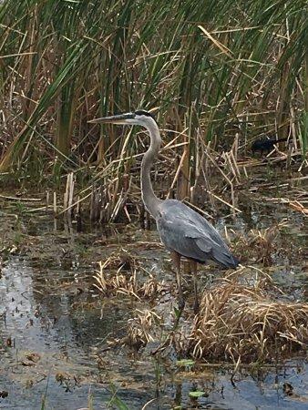 Kissimmee, FL: photo3.jpg