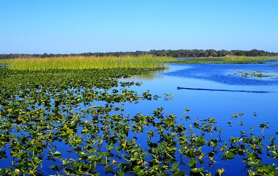 Kissimmee, FL: The plants in the swamp were gorgeous!