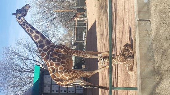 Denver Zoo: 20170318_104714_large.jpg