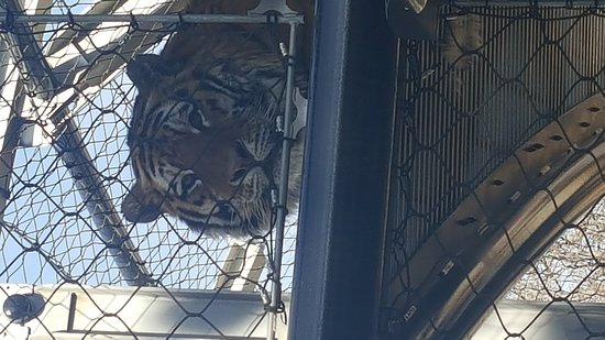 Denver Zoo: 20170318_105257_large.jpg