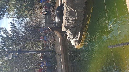 Denver Zoo: 20170318_112335_large.jpg