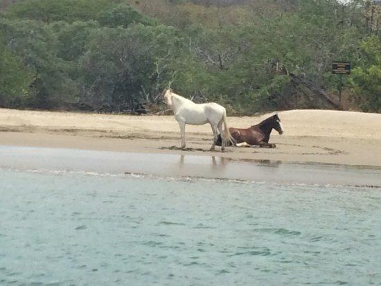 La Cruz, คอสตาริกา: Wild Horses