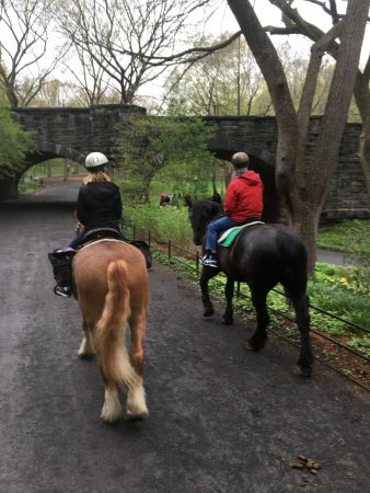 Central Park Sightseeing: 1 hour ride through Central Park on Ace and Blackjack
