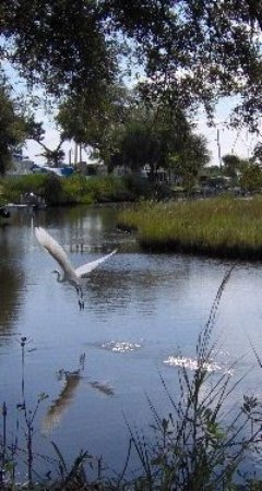 Oak Hill, FL: photo0.jpg