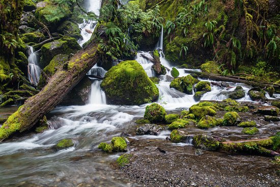 Quinault, WA: The base of Merriman Falls