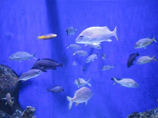 The Florida Aquarium: There are fish