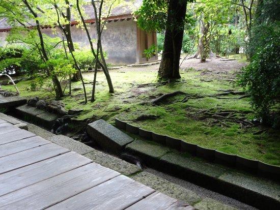 zen garten picture of ryoanji temple kyoto tripadvisor. Black Bedroom Furniture Sets. Home Design Ideas