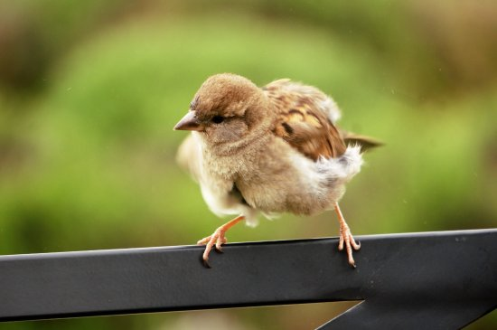 Landford, UK: sparrows join you for lunch
