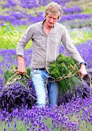 Landford, UK: harvest time