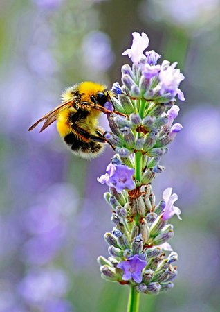 Landford, UK: bees and butterflies