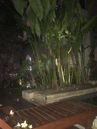 The Kubu Hotel: photo0.jpg